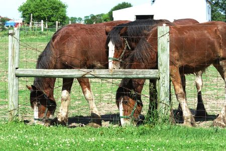 Brown Horse Friends by Fence Stock Photo
