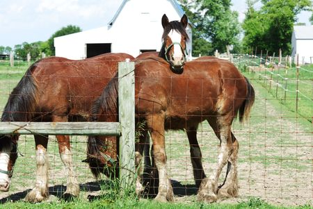 wire mesh: Brown Horse Friends by Fence Stock Photo