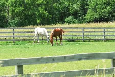 Two Horses Grazing Stock Photo - 5844311