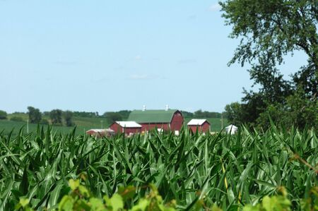 distance: Farm in the Distance Over Corn Field