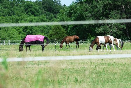 blanket horse: Horse with Pink Blanket Grazing with Friends Stock Photo