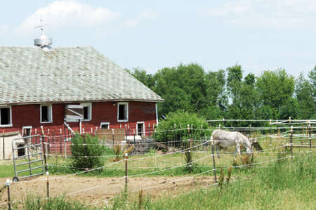 Donkey by Old Red Barn Stock Photo - 5997300