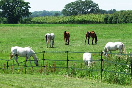 Horses in the Pasture photo