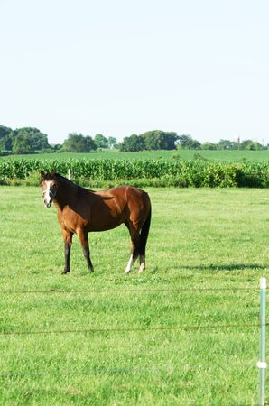 Big Brown Horse Standing in Pasture photo