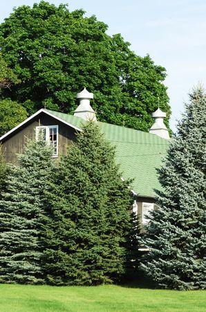Gray Barn and Evergreen Trees Stock Photo - 6199012