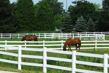 Brown Horses Grazing in White Fences