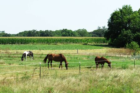 Herd of Horses Grazing Stock Photo - 6436641