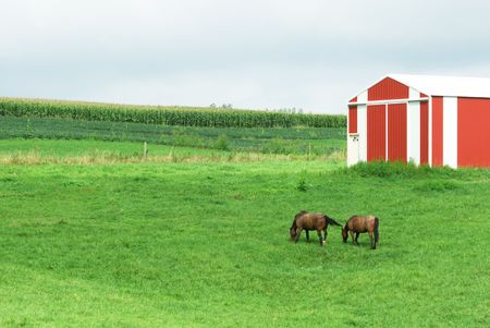 Two Brown Horses by Red Barn photo