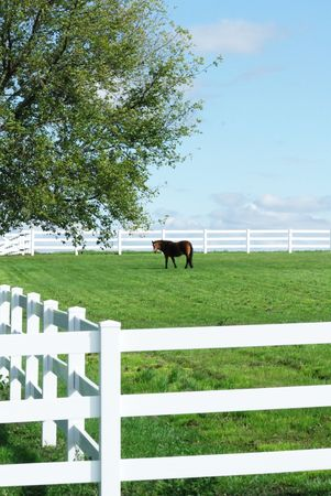 pasture fence: Horse in Green Pasture