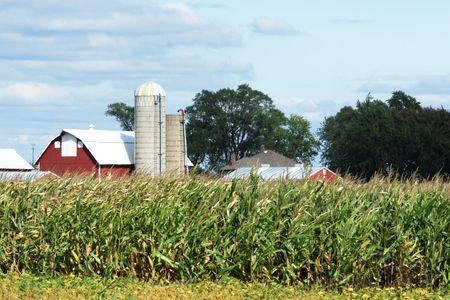 Farm Over the Cornfield Stock Photo