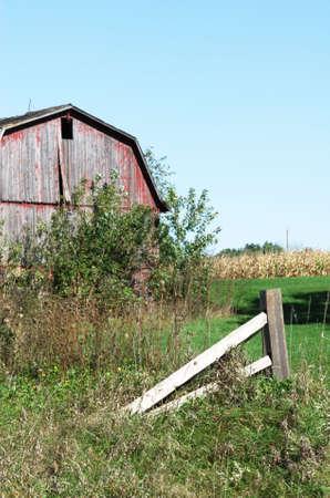 Weathered Barn by Cornfield photo
