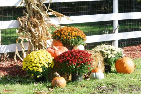 corn flower: Fall Display by the White Fence
