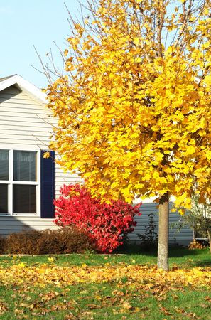 red bush: Fallen Leaves by Red Bush and House