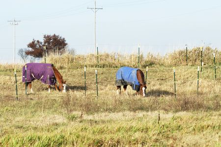 Two Horses Grazing in Blankets photo
