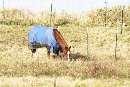 Horse Grazing in a Blanket Stock Photo - 7084148