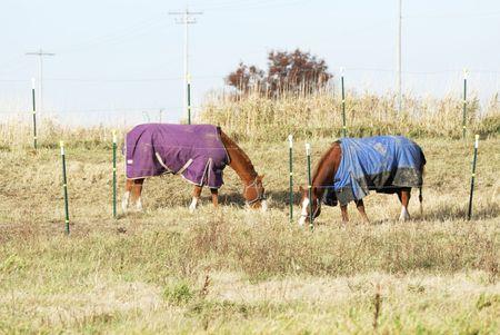 Horses Grazing in Blankets Stock Photo - 7084138