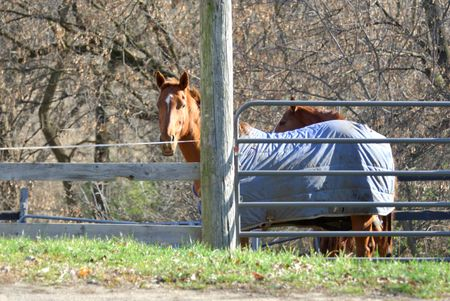 blanket horse: Brown Horse with Blue Blanket by Pole Stock Photo