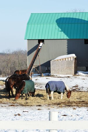 Horses with Blankets photo