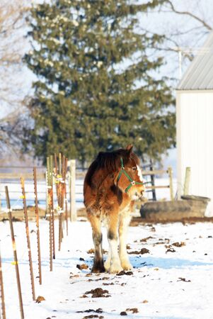 Brown Horse by the Fence and PIne Tree photo