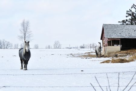 Two Horses in Winter Corral Stock Photo - 7348907