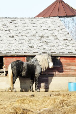 Percheron  and Shadow by Shed Stock Photo - 7374595