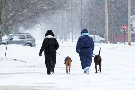 Walking Dogs in the Snow photo