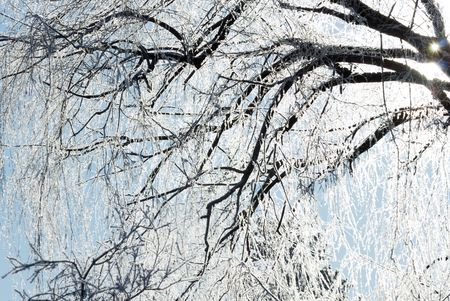 limbs: Sunshine Through Icy Tree Limbs Stock Photo
