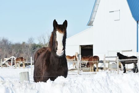 Horse Over the Snow