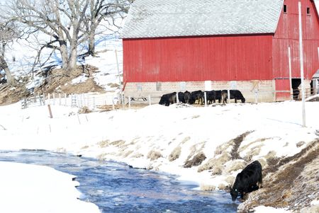 Stream by Red Barn and Cows photo