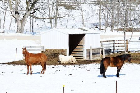 Three Horses in Winter photo