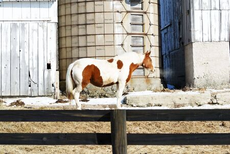 Pinto by Silo Stock Photo - 7617797