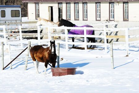 Three Horses in Snowy Corral photo