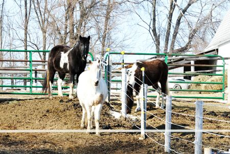 Three Horses in Muddy Corral