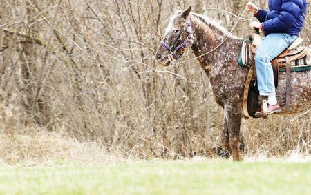 Horseback Rider Stock Photo - 8208921