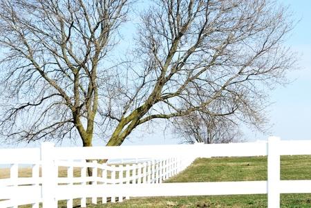 White Fence on Hillside photo