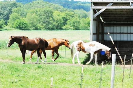 Three Horses in Corral photo