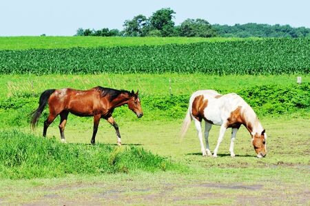 Two Horses in Pasture Stock Photo - 9456234