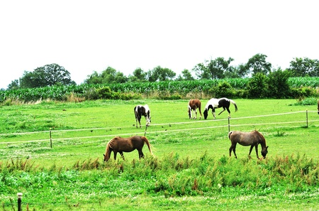Horses on Cloudy Day Stock Photo - 9489285