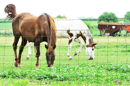 Horses by Fence photo