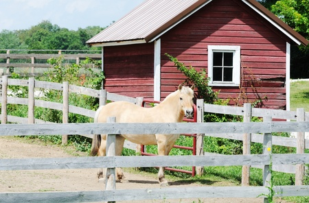 Horse in Dry Corral