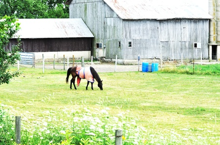 Horse with Blanket photo