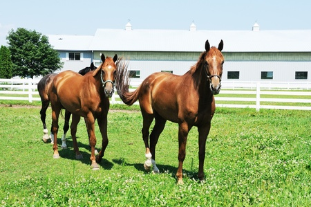 Three Horses Reklamní fotografie