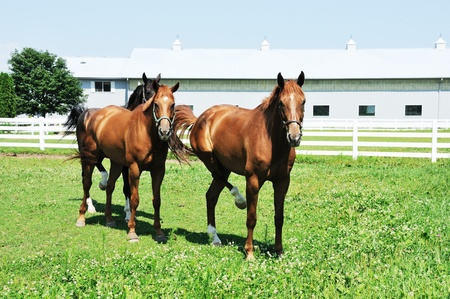 Three Horses Archivio Fotografico