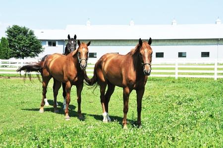 Tre cavalli Archivio Fotografico - 10202226