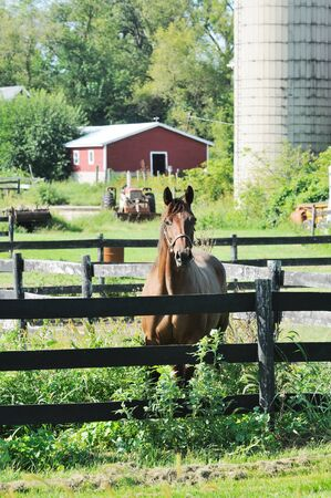 Horse at Fence photo