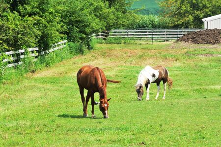 Horses Grazing photo