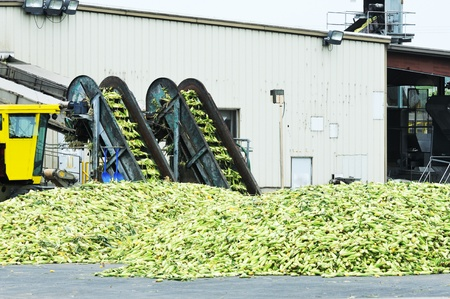 Corn Canning Plant Stockfoto