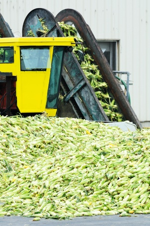 food industry: Corn Canning Plant Stock Photo