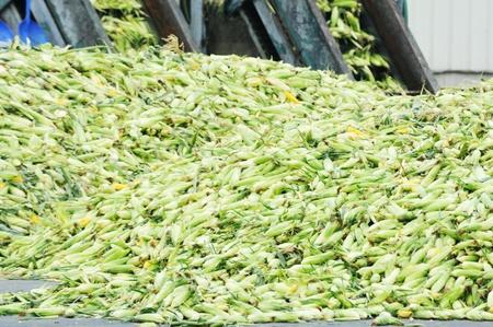 Corn Canning Plant photo