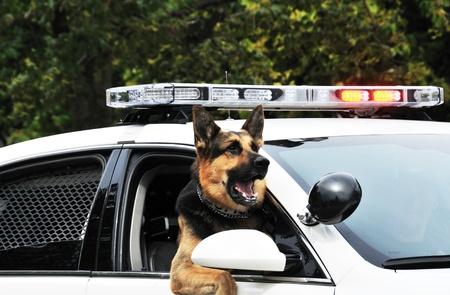 perro policia: Perro polic�a Foto de archivo